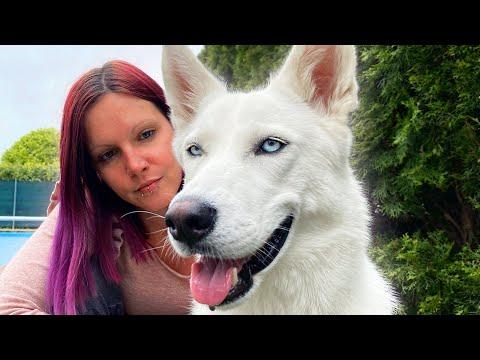 How My Dog Changed My Life!