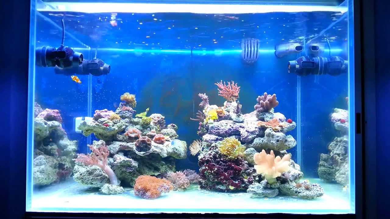 Acquario marino 200 litri casamia idea di immagine for Acquario shop online