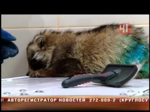 Нашли енотовидную собаку в Екатеринбурге
