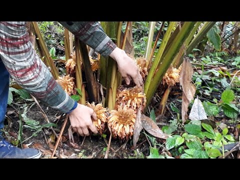 Hmong Global | Ncig Saib Hmoob Cog Hawg thumbnail