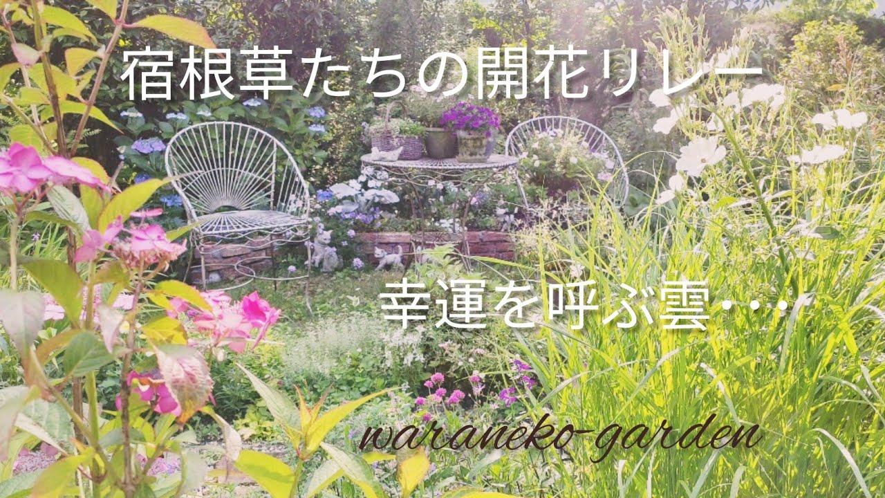 宿根草たちの開花リレー\幸運を呼ぶ雲・・・Perennial flowering relay \ Clouds that bring good luck ...