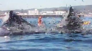 Surferin beinahe von Walen verschluckt