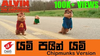 Yami Pain Yami Chipmunks Cover - Wasthi Productions   වස්ති යමි පයින් යමි Chipmunks