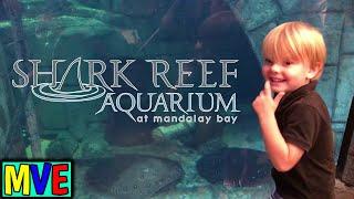Maverick's Shark Tank Experience | Las Vegas Sharks & Manta-rays Aquarium for kids