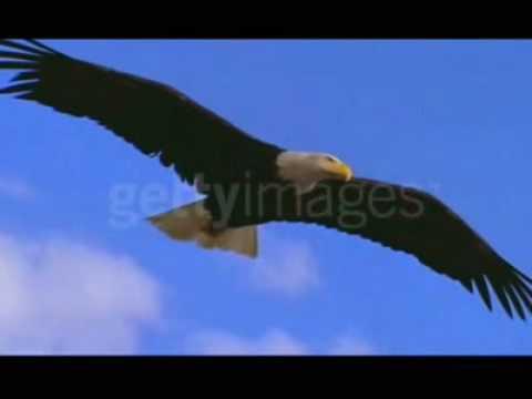 A águia Em Seu Voo Para Vitória