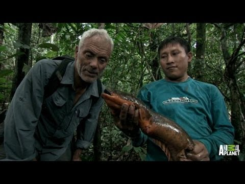 Face to Face with an Electric Eel | River Monsters