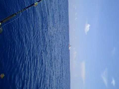 Dolphin Fishing Offshore at Holiday Isle Resort & Marina Isl