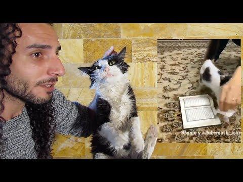 القطة التي ادهشت العالم ورفضت ان تدوس على القرآن الكريم