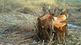 Hevsel Bahçeleri'nde 'ağaç nöbeti' - BBC TÜRKÇE