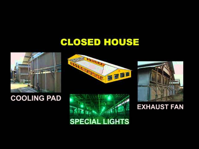 Kandang Ayam Closed House, Kandang Tertutup, Exhaust Fan, Cooling Pad, ADAM NV