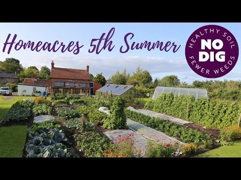 Homeacres no dig garden fifth summer: veg, fruit, flowers, intense cropping and easy weeding.