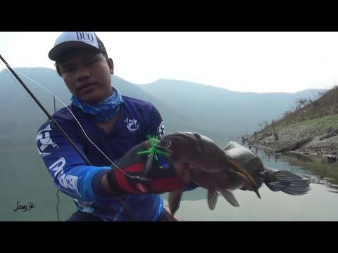 ตกปลาช่อนงูเห่ายักษ์ ด้วยกบลุงใหญ่