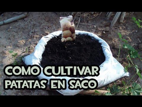 C mo cultivar patatas en casa con sacos la huerta de for Como cultivar patatas