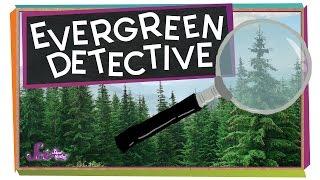 Evergreen Detective!