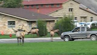 Yellowstone - Mammoth Hot Springs - Boiling River - Airstream RV Living