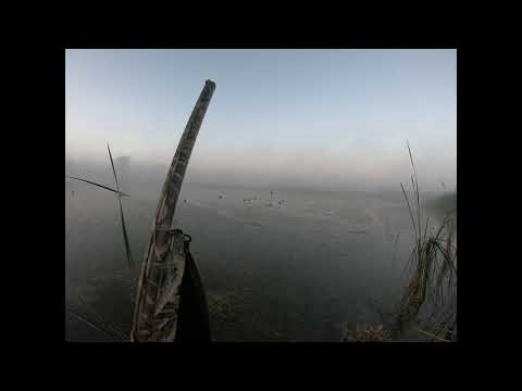 8 MINUTE SOLO LIMIT!!! 2020 Wisconsin Early Teal Season!!! Duck Hunting In The Fog!