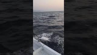 Gambar cover Karadeniz Alaplı Seyfullah Tekin