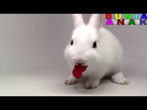 Funny Bunny Rabbits Videos For Kids Animals Videos For Kids