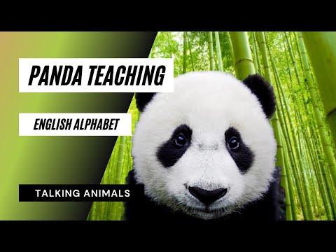 Learn English Alphabet With Panda - Animation