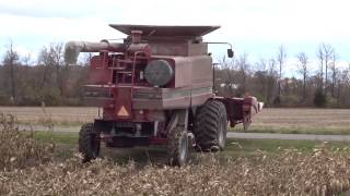 corn harvesting with a 1996 case ih 2166 combine in britton michigan