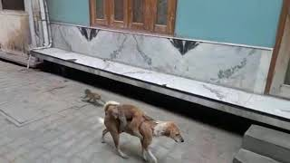 Monkey and Funny Street Dog