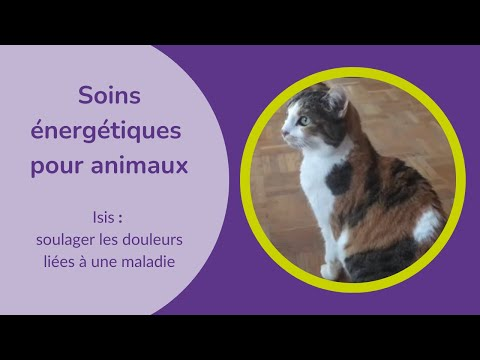 Découvrir en vidéo une séance de soins énergétiques pour animaux