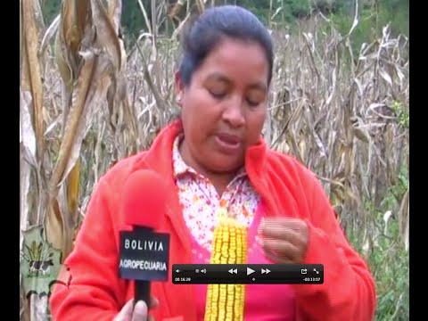 Guaraníes producen Miel de Abeja, maíz, mani y ají en el Chaco Chuquisaqueño con Ayuda en Acción