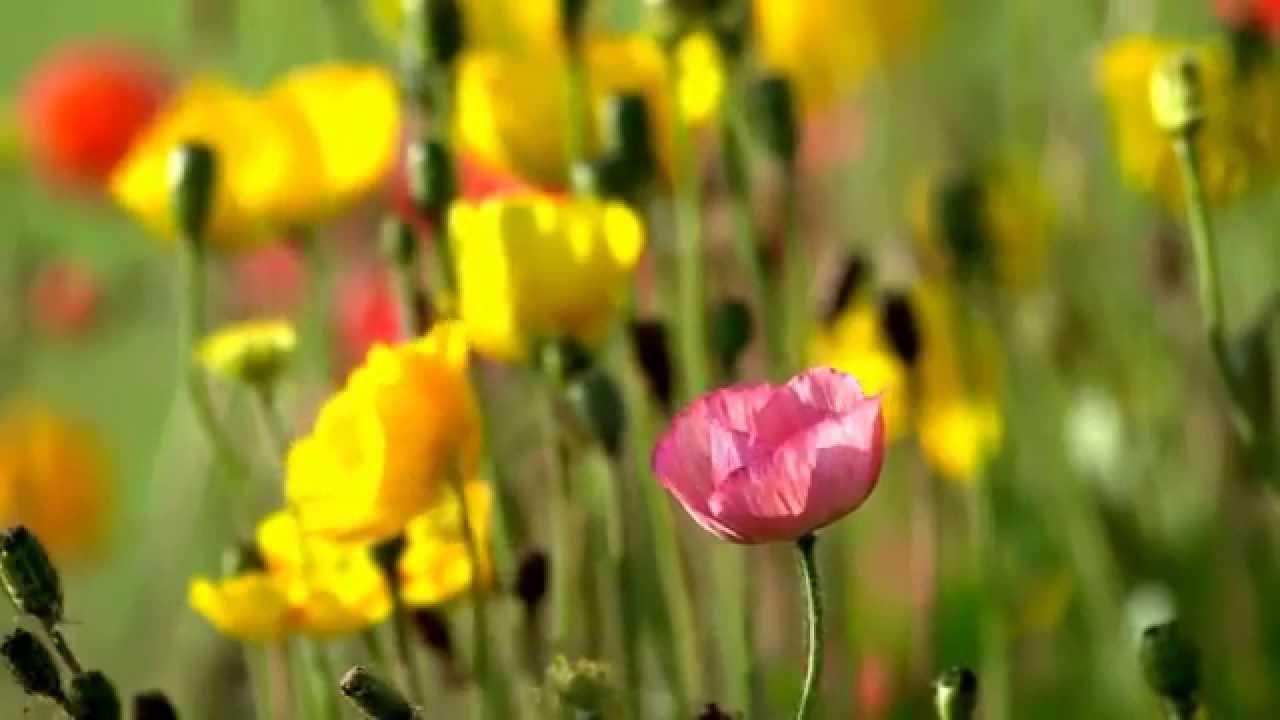 скачать картинки цветы полевые