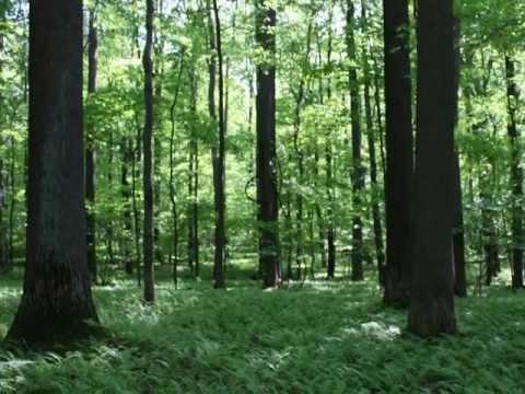 Hymm - El Bosque Encantado