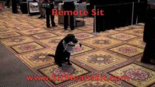 Dog Obedience Commands - Sit Means Sit Dog Training