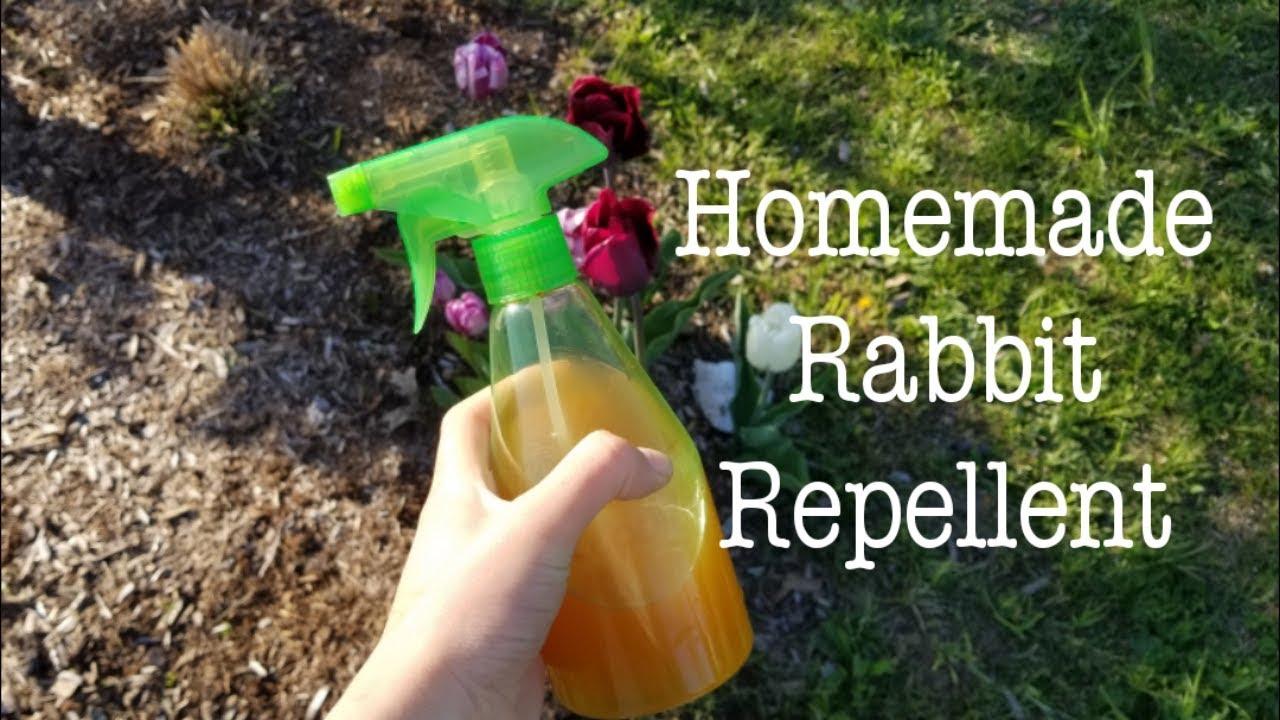 Homemade Rabbit Repellent 🐰🦌 - YouTube
