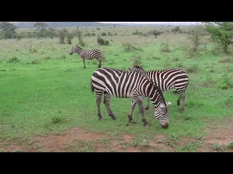 Kenya Nairobi safari
