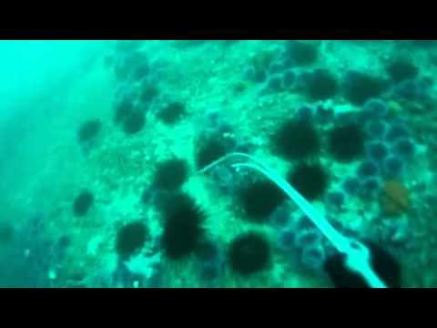 California Sea Urchin Diver