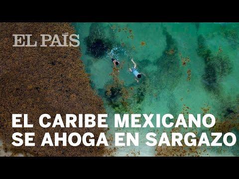 El sargazo enferma al caribe mexicano