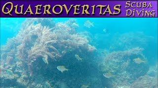Scuba Diving With Q - Exploring Underwater At Shelly Beach Queensland #ScubaDive #ScubaDiving
