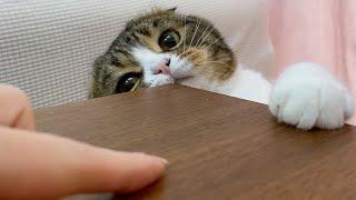 親子猫とどちらの手を上に置けるか勝負してみたらこうなったw