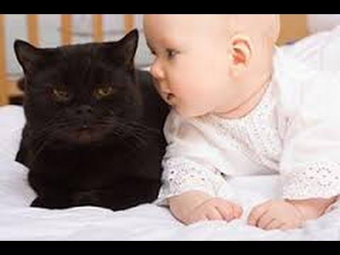 Chats mignons et bébés câlins , Babies Love Cats Compilation