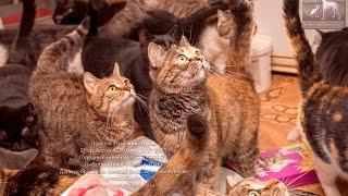 Секрет счастливой жизни Кошки в приюте для животных Новосибирск приют Дари добро