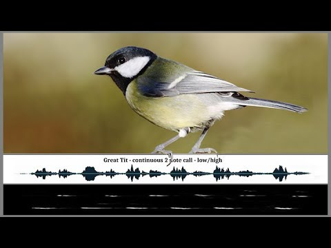 The Songs and Calls of the Great Tit