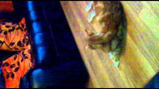 cat scared of bag
