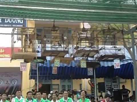 Top 10 Hội thi mở rộng lần thứ nhất CLB Chào Mào Thủy Dương (clip 1)