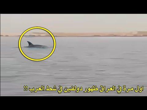 اول مرة في العراق ظهور دولفين في شط العرب !!