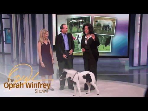 Meet Einstein, the World's Cutest Miniature Horse | The Oprah Winfrey Show | Oprah Winfrey Network