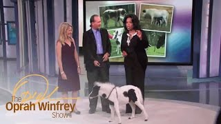 Meet Einstein, the World's Cutest Miniature Horse | The Oprah Winfrey Show | Oprah Winfrey Network