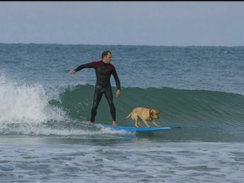 SURFING DOG: Mango can ride waves after being trained