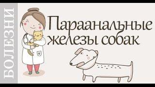 Проблемы параанальных желез собак. #Советы_ветеринара