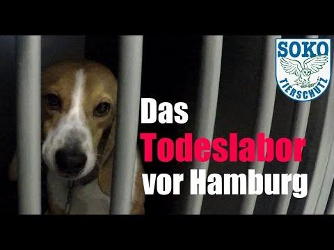 Das Todeslabor Vor Hamburg: LPT // SOKO Tierschutz E.V.