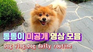 [통통이네일상]미공개영상 방출|Dog vlog|Dog …