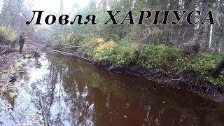 Ловля - Рыбалка на Хариуса ОСЕНЬ 2019 на маленькой речке - ручей!!!