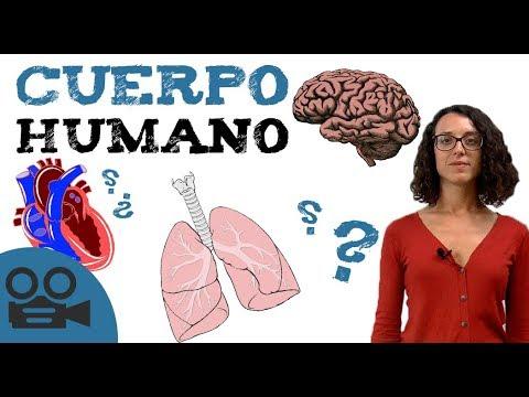 Sistemas de cuerpo HUMANO - Órganos del cuerpo - YouTube